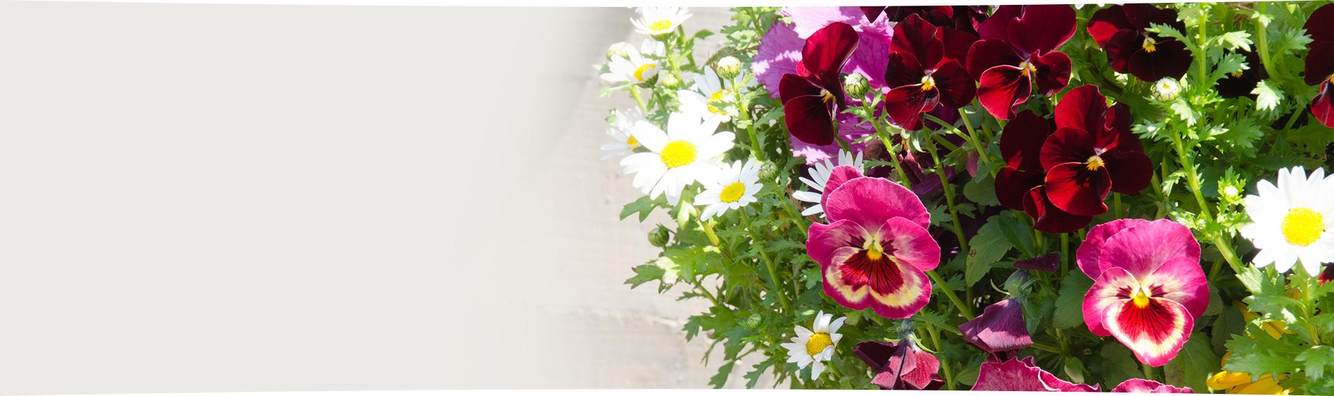 フローラルピット アトリエ花と彩